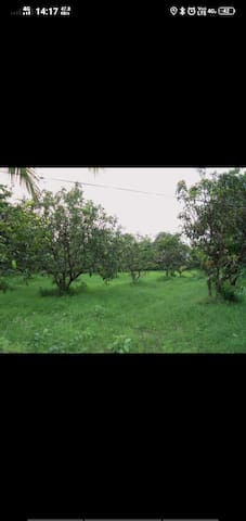Natural Farm stay Nearby by beach