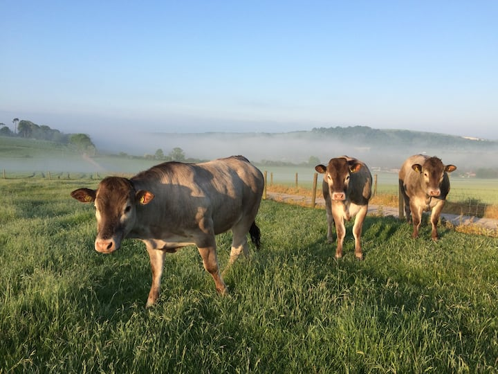 Stunning FARM cottage Gallops Farm, FINDON