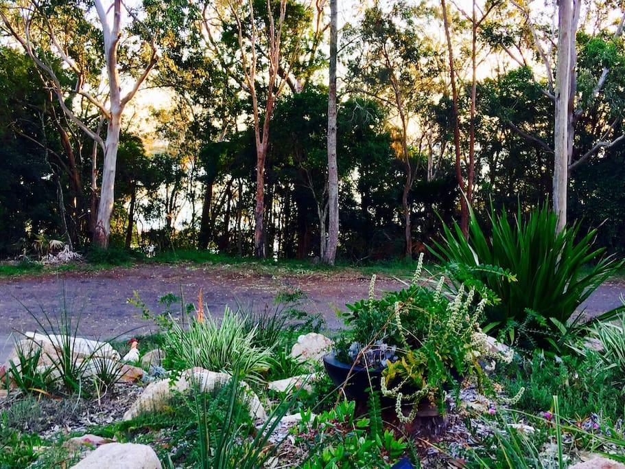 Front garden looking towards the waters of Port Stephens