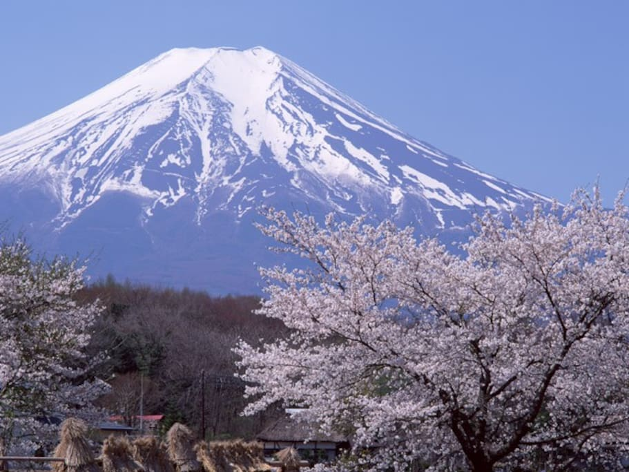 """I named the room """"SAKURA"""" (cherry blossoms) that is the most favorite flower in Japan."""