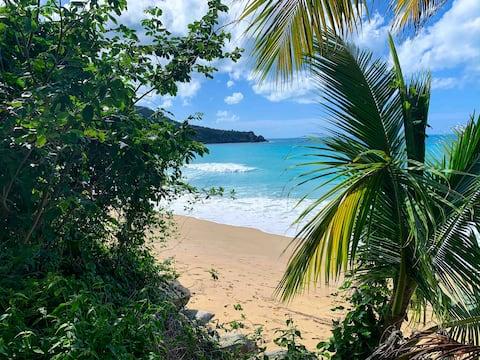 GreenLeafOasis #2 | A Beach Lover's Paradise