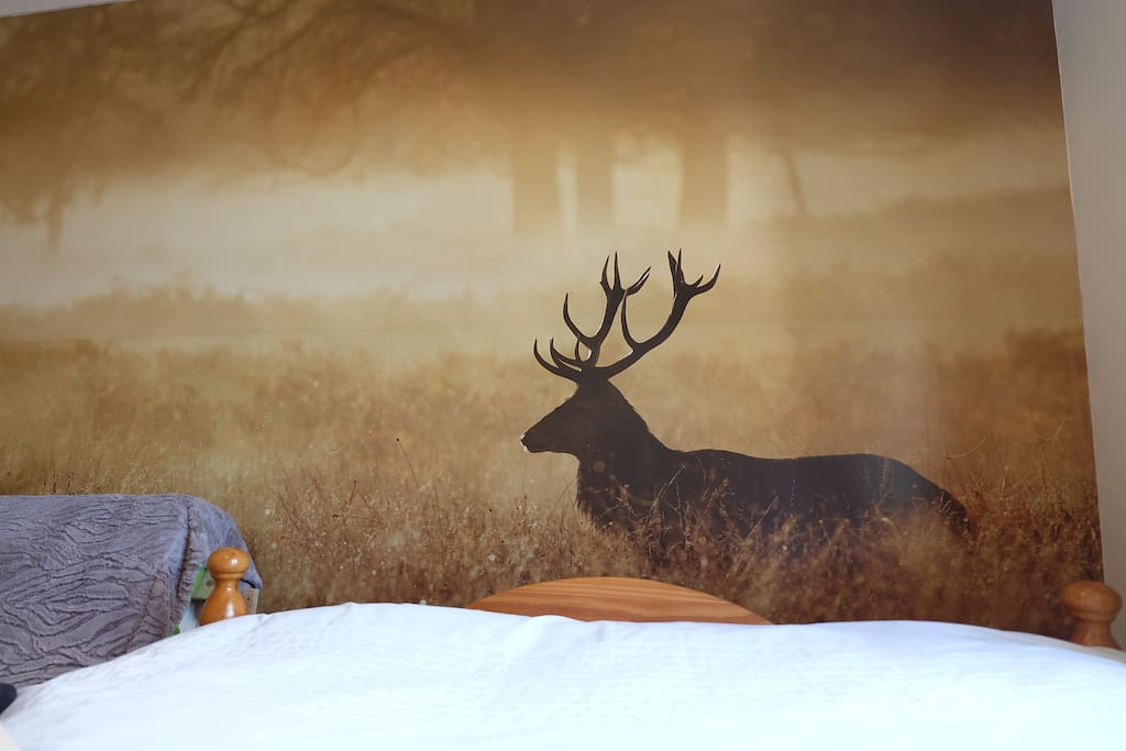 Wake up to a stag in the early morning dew