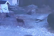 Deer just outside the studio.