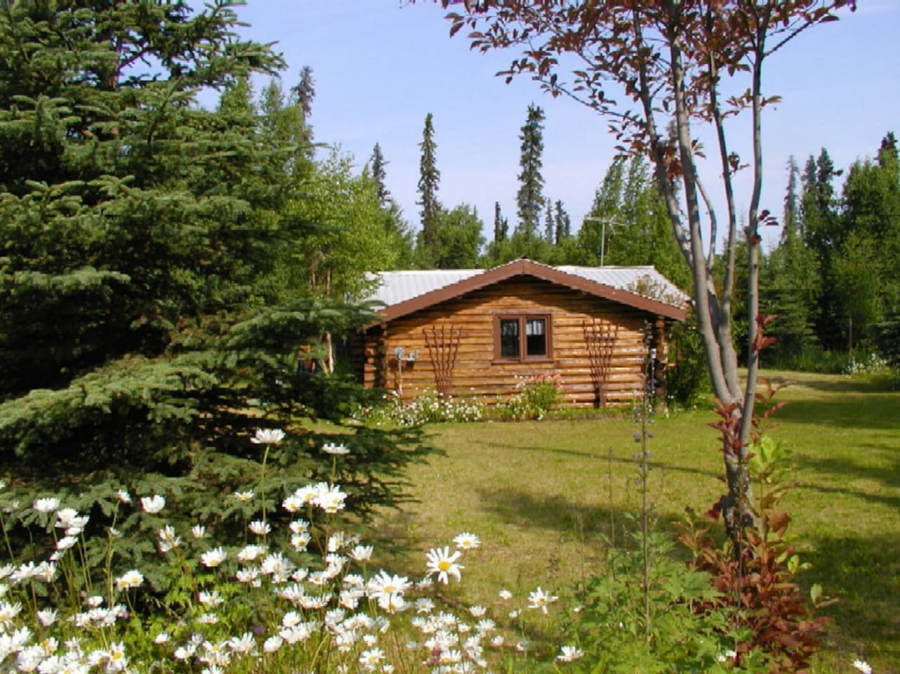 A cozy Alaskan cabin nestled in the woods on Hope Lake