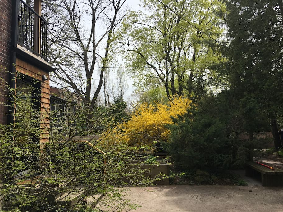View of Backyards in Spring