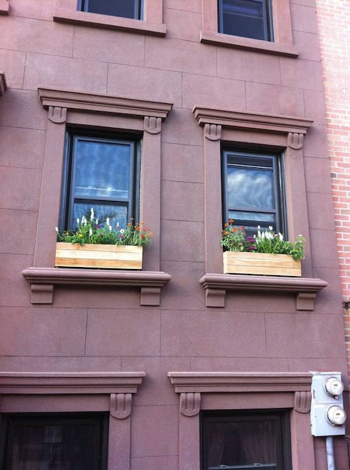 Just behind these windows, your Bed-Stuy adventure begins...