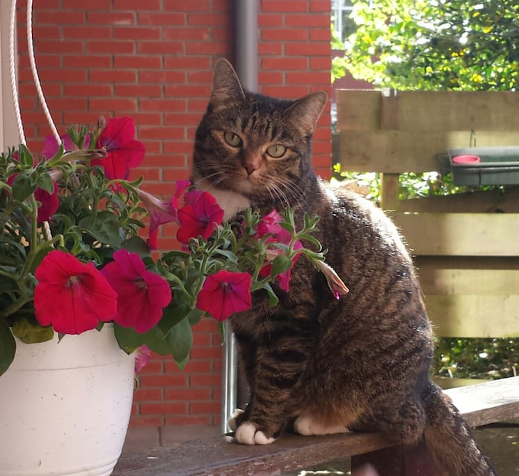 Onze lieve poes, Shoshi.