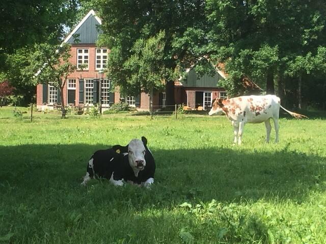 Huisje in 't groen  Rural Holiday home
