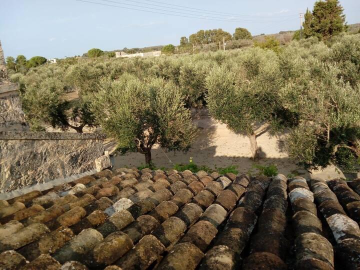 Sipati • casa degli ulivi