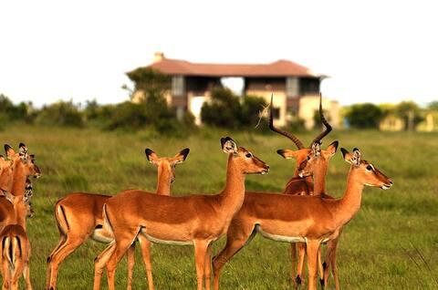 BARAKA VILLA at Ol Pejeta,Mt Kenya Wildlife Estate