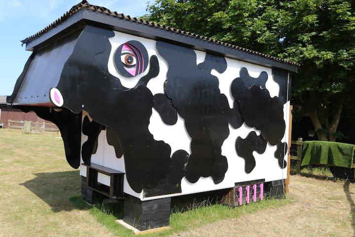 Cow Shed: Daisy at Easton Farm Park