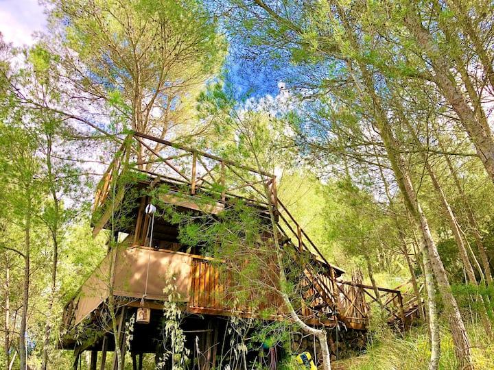 Lodge / Buena Vista