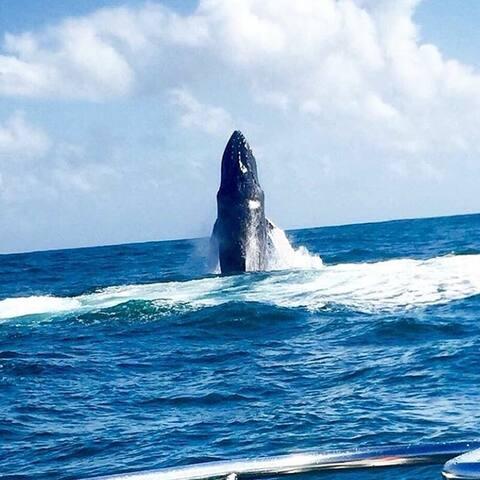 Moment spectaculaire, admirez les baleines du Canada et ses baleineaux de fin janvier à mars.