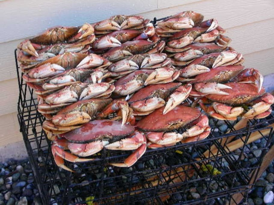 Dungeness crabbing is a lot of fun to try.  Crabbing is very good in front of our home.  The taste of fresh caught crab is amazing.  We provide two crab pots, bait, and boats to place the pots.