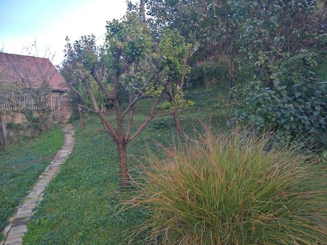 Oasis with a view - Sremska Kamenica - Andre