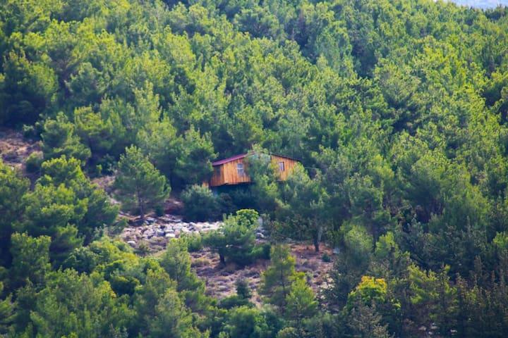 Hardine Treehouse