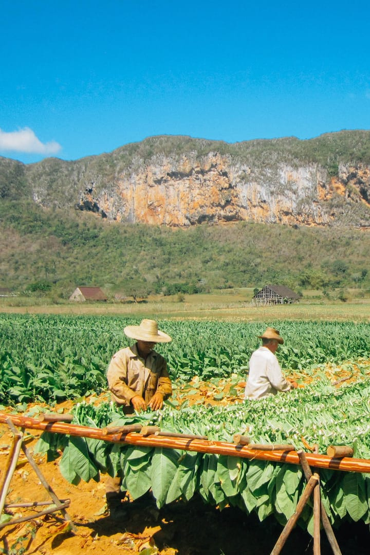 Farmers working in my farm