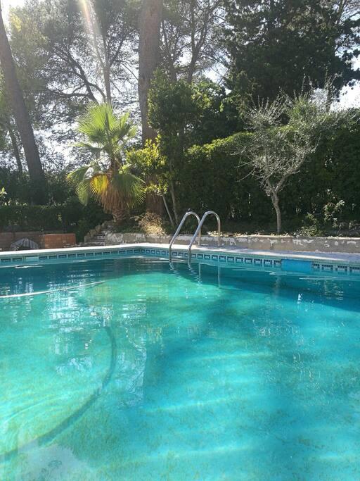 piscina rodeada de pinos