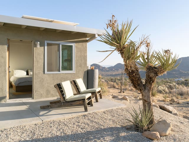 *NEW* - Mojave Fleur in the Joshua Tree Highlands