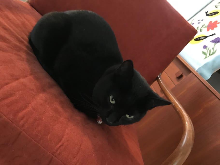 Kitty host 2.