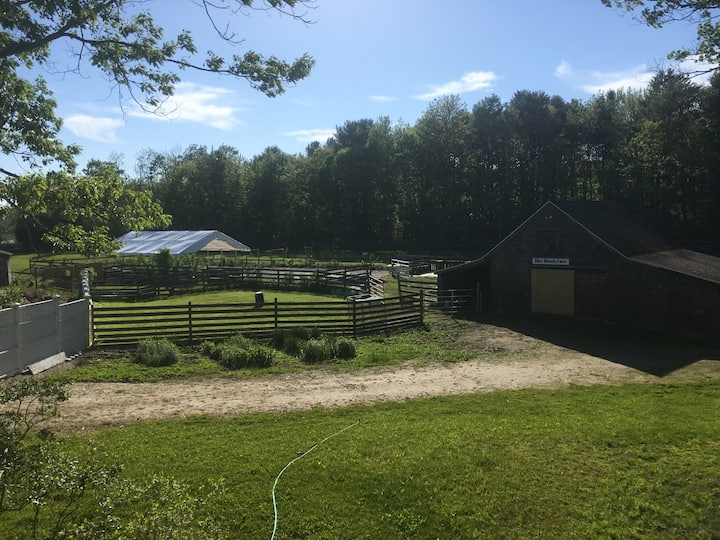 Whole Dog Camp at Bliss Woods Farm