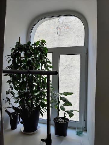 Уютная комната на Васильевском острове