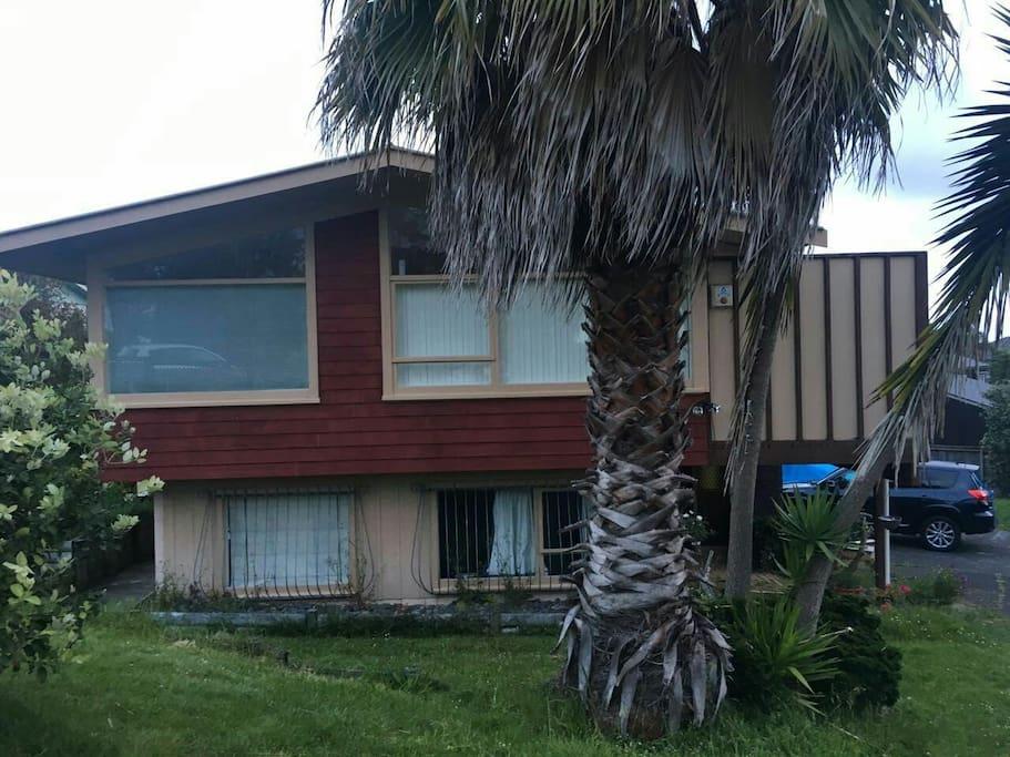 院子里的大棕榈树