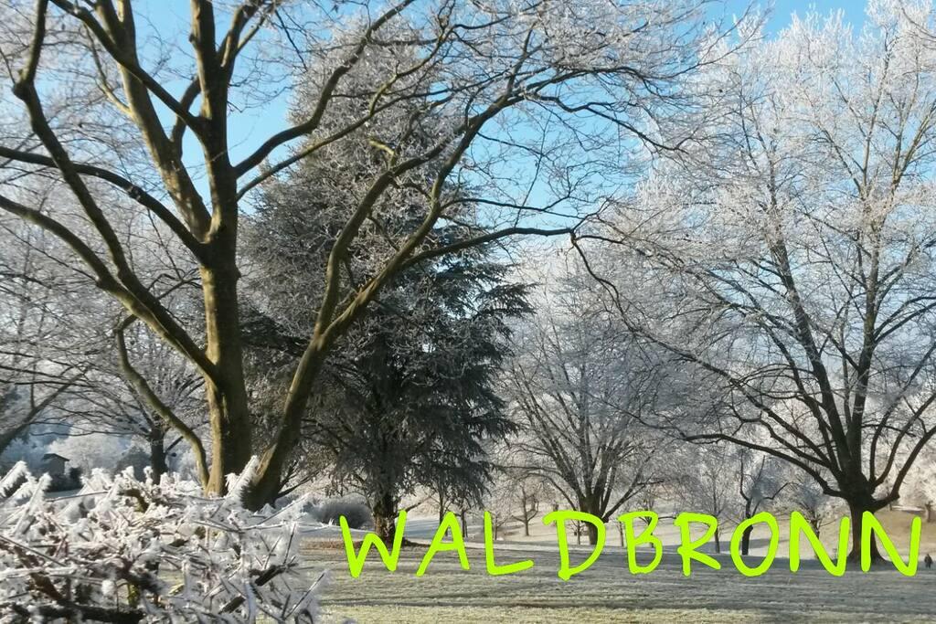 Waldbronner Kurpark