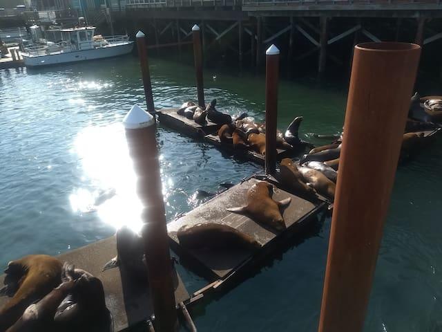 Sea Lions Newport Bay