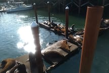 Sea Lions Newport Bay