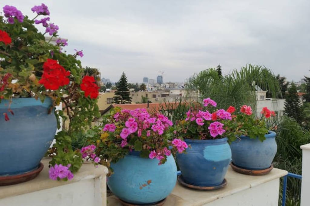 Terrace and city view