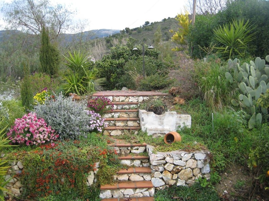 steps to top patio area