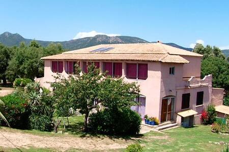 Pinarello, Studio à louer