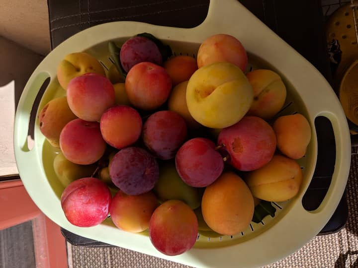 Harvested Fruits from garden