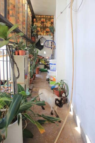 Balcón y gatito