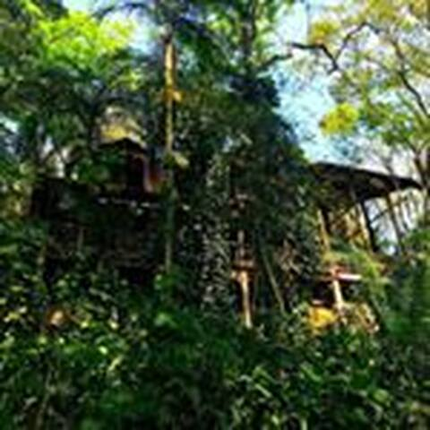 Welcome to Remo Hostel, the real treehouse!!