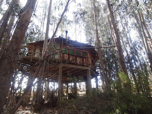 Rústicas y acogedoras cabañas en medio del Bosque! - Isla Negra - Naturstuga