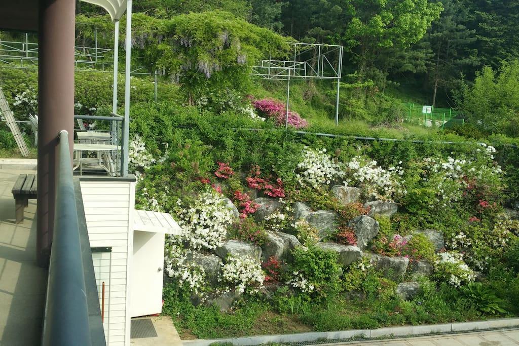 베란다에서 바라본 정원