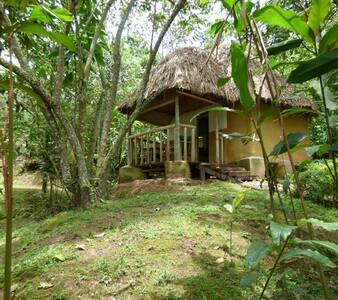 NSHONGI FOREST CAMP  Bwindi Impenetrable Forest