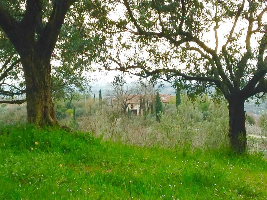Il Castello from the hillside above