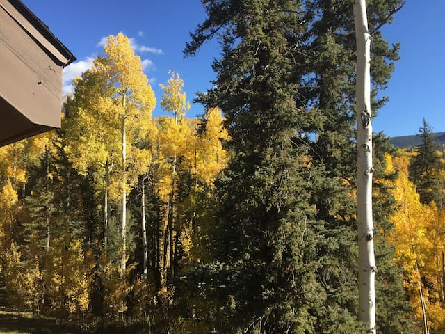 Our backyard of Aspen and Spruce enjoyed from our deck