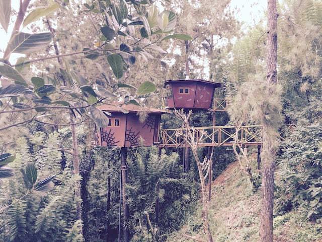 The Tree House - Ginigathhena - Rumah Pohon