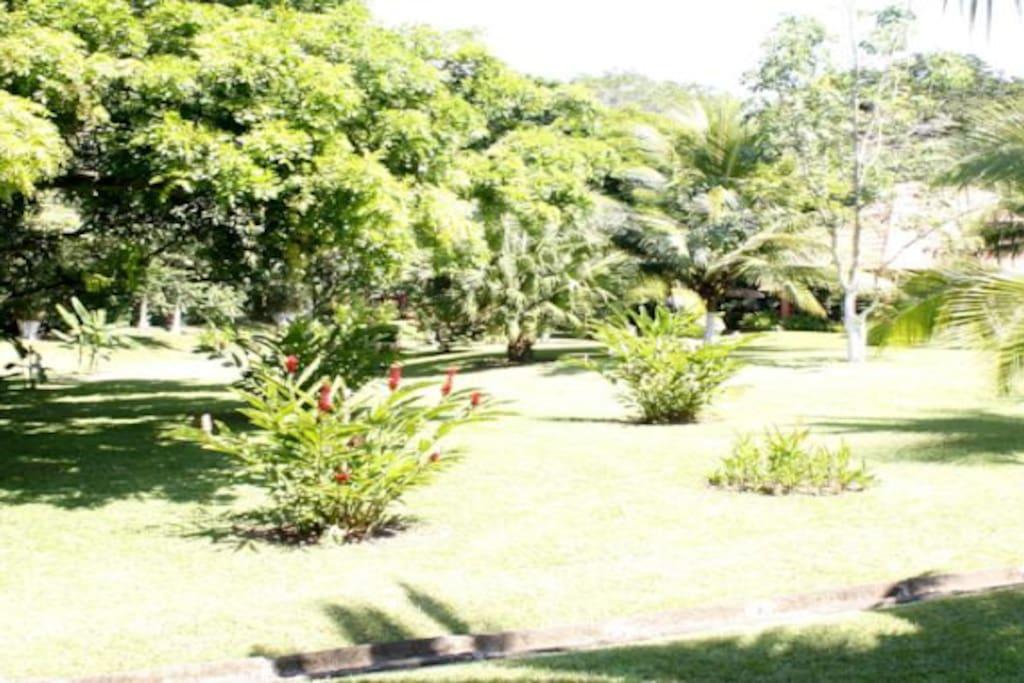 Extensos Jardines Tropicales