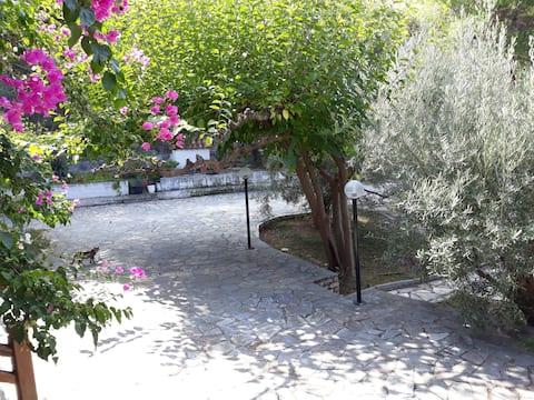 σπίτι σε ελαιώνα, house in an olive grove