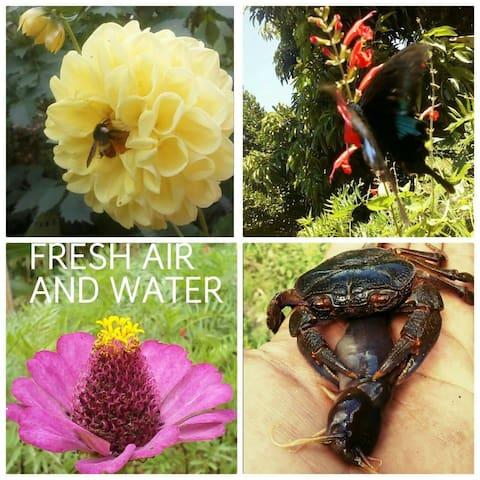 Rishikesh highland organic coffee farm