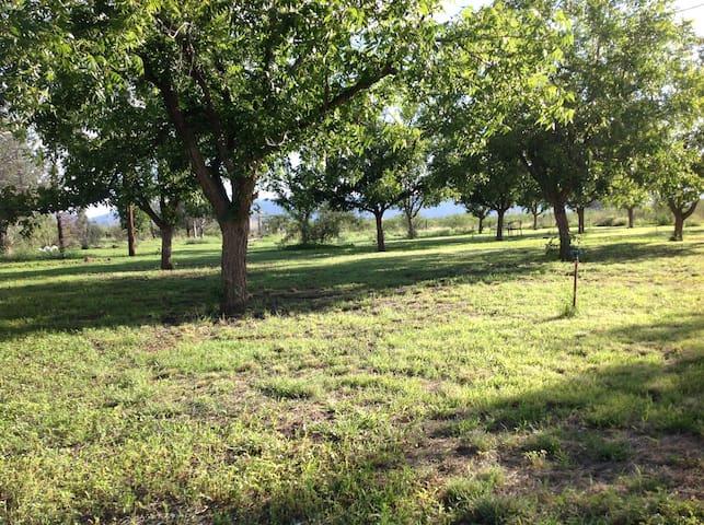 Small Pecan Farm - Cochise - Hus