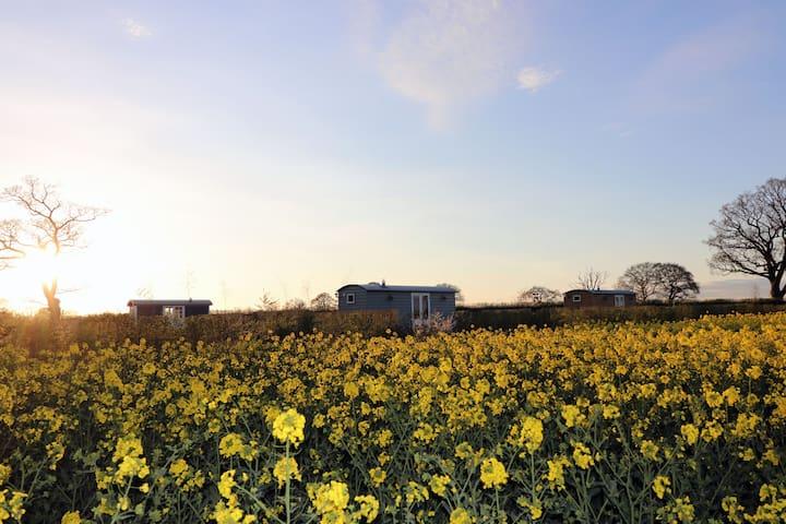 Waingates Farm Huts - Roecliffe TAIN