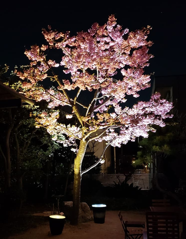 Light up the cherry blossoms in my garden