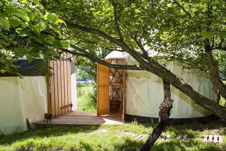 Beautiful handmade yurt in a private copse