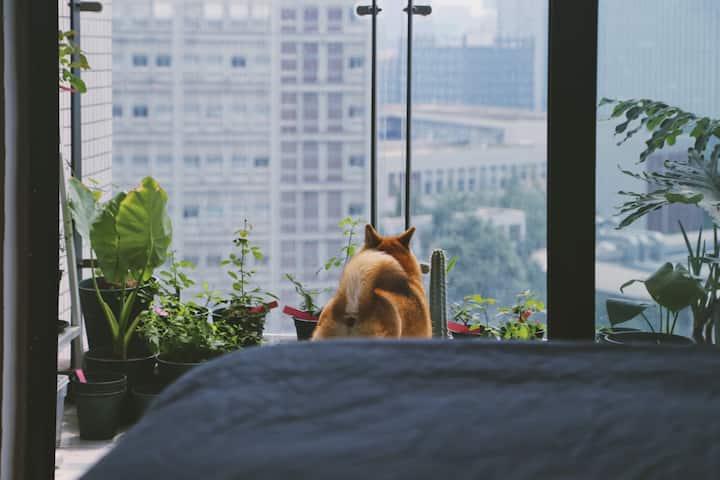 [Gloria's Home]植物园阳台简约舒适公寓/成都软件园CBD一号线天府三街地铁口